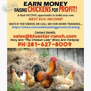 Earn Money Raising Chickens For Profit!