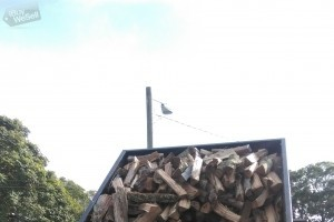 Seasoned split Oak firewood